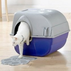 Teach your cat to use its litter box